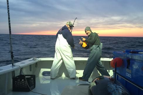 Cape cod sportfishing charters machaca charters on cape for Fishing charters falmouth ma